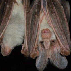 Exterminator Wayne NJ Bat Removal Services