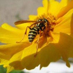 Exterminator Wayne NJ Bee Removal Services