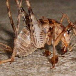 Exterminator Wayne NJ Cave Cricket Removal Services