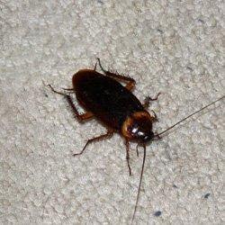 Exterminator Wayne NJ Cockroaches Removal Services