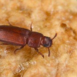 Exterminator Wayne NJ Pantry Pest Removal Services