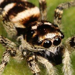 Exterminator Wayne NJ Spider Removal Services
