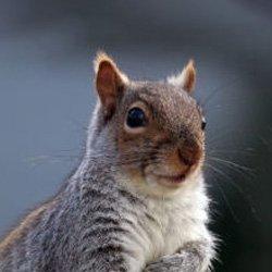 Exterminator Wayne NJ Squirrels Removal Services
