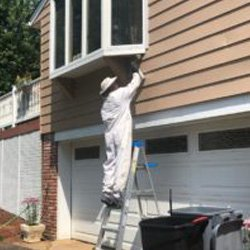 Pest Control Wayne NJ Stinging Insects Removal